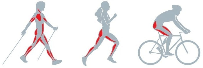 Nordic Walking - zapojení svalů